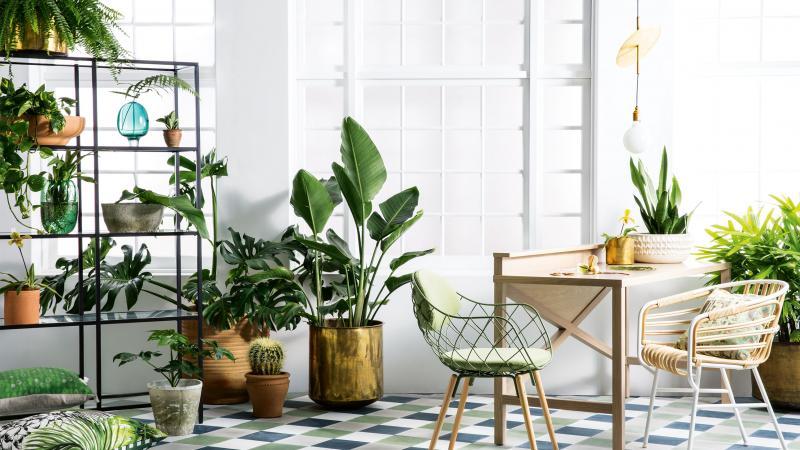 Interior-Trend: Pflanzen